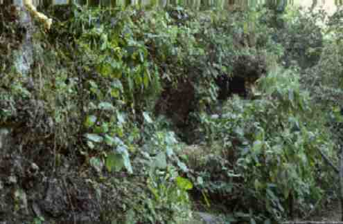 Caves hidden by forest underbrush dot the hillside of the ashram grounds.